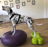 Foto de Dogs Reha - Reha Training für Hunde