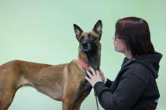 Fotos de Dogs Reha - Reha Training für Hunde