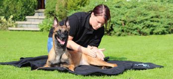 Foto de Dogs Reha - Reha Training für Hunde Bad Reichenhall