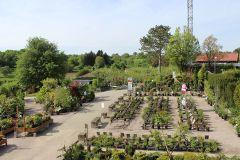 Fotos de Gartenfachbetrieb Bräuninger